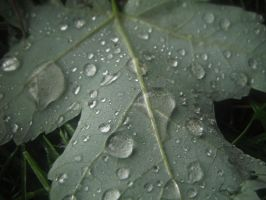 wet leaf by mysteriousfantasy