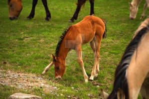 Pilot Grove Colt Drinking by lividity101