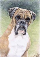 Boxer Hutch by ArtsandDogs