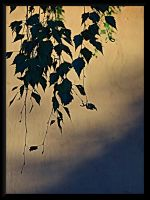 The end of summer... by Yancis