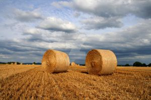 straw bales 3 by ChicoMario