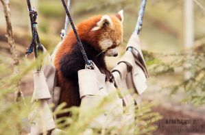 Sitting in the hammock. by Ravenith