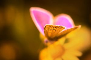 wings by werol