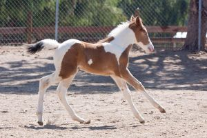 HORSE STOCK - Foal 2 by kittykitty5150
