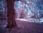Borsig Park Tree Berlin Infrared by MichiLauke