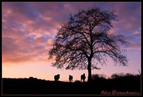 Dusk Silhouettes by allym007