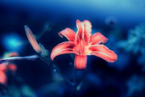 underwater lily by getia