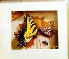 Butterfly Shadowbox by PukingRainbow