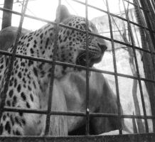 cat in cage by donpaking