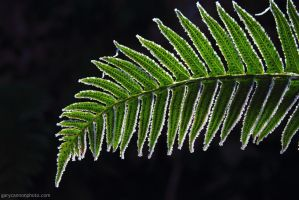 Frosty Fern by worldtravel04