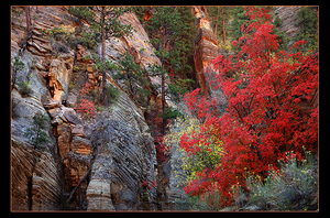 Fall colors in Zion by narmansk8