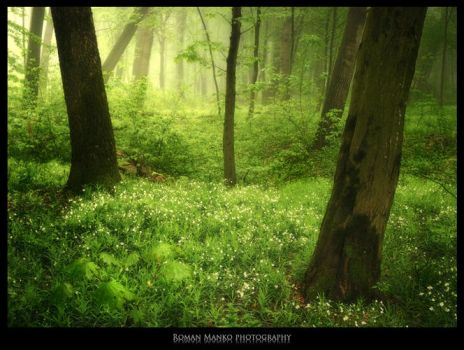 Green world: Fairy-tale glade by manroms