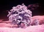 Infrared Vision XIV by eclecticeel