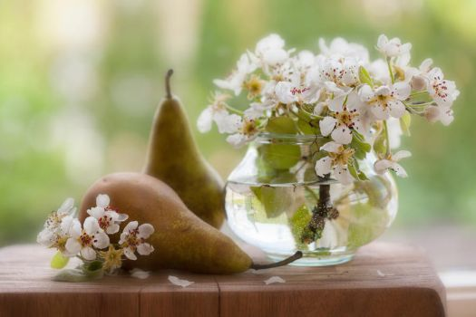 Pears by SarahharaS1