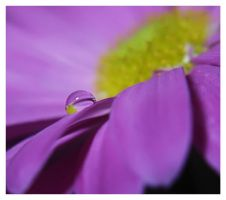 droplet 8 by mzkate