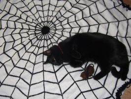 Spiderweb blanket by foxymitts