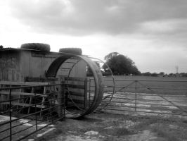 Giant Hamster Wheel? by WendyW