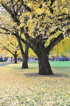Autumn 2013 by esee