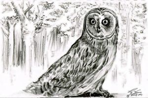 Owl is watching by hidden-by-art