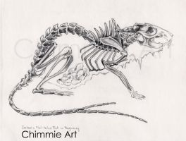 The Jackson's Flail-tailed Rat in Pregnancy by IAmChimmieArt