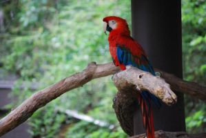 The Red Parrot by wordpainter81