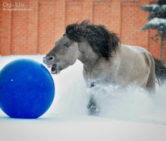 winter horse games II by Olga5
