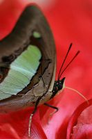 Butterfly Photo 24 by blookz
