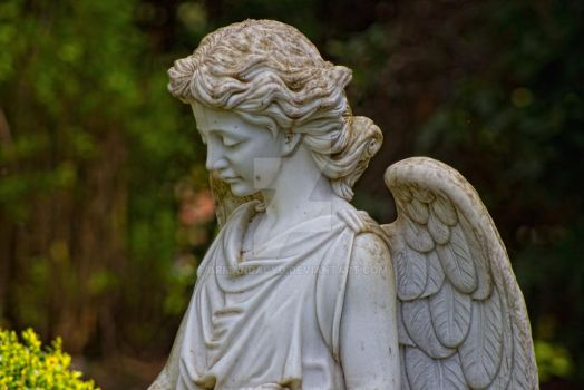 a sheltering angel by Armandacyd