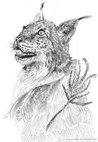Lynx by Arjello