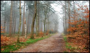 More misty forest walks ahead by jchanders