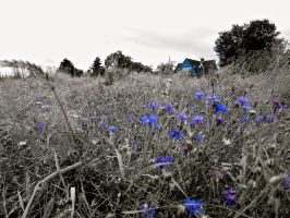 The blue Way by Xfluegge
