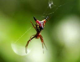 evil spider by mechanic