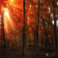 moment in time by ildiko-neer