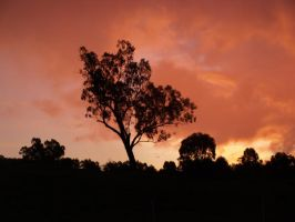 sunset over the tree top hill by riverrain