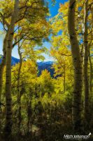 The Wasatch Through the Gold by mjohanson
