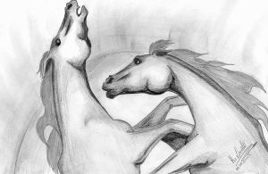 Horses by LadyWera