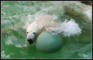Jumping for the ball by AF--Photography