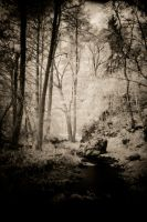 IR - forest in fall by DanielGliese