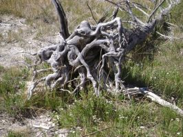 Gnarly Roots by MidknightStarr