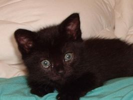 3 weeks old, so innocent by amartin1985
