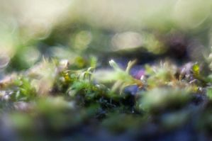 moss by Blubdi-Photography
