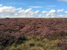 Gt. Longstone and Moor 05 by IanTP