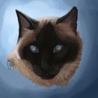 Pet Portrait -- Blue by InstantCoyote