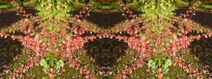 Giant Sylvan Red Spider Mite In Stereo by aegiandyad