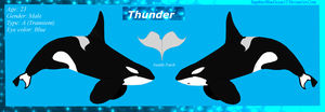 Thunder Reference Sheet by SapphireBlueOcean12