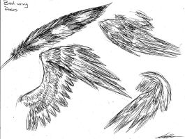 Bird wing Poses by Lady-Envy
