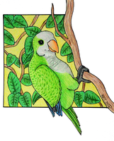 Quaker Parrot by TornFeathers