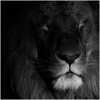 the lion sleeps tonight by 13-septembre