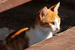 Cavtat Kitty 1 by wildplaces