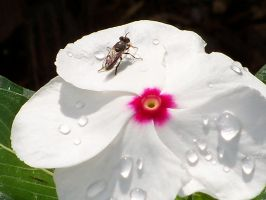 There's a fly on my flower! by LaEmperatrizMariana